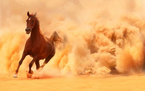 arabian_horse_running_out_of_the_desert_storm-1920x1200.thumb.jpg.d155cfe99a758f2e8d0c48e0b8acce1d.jpg